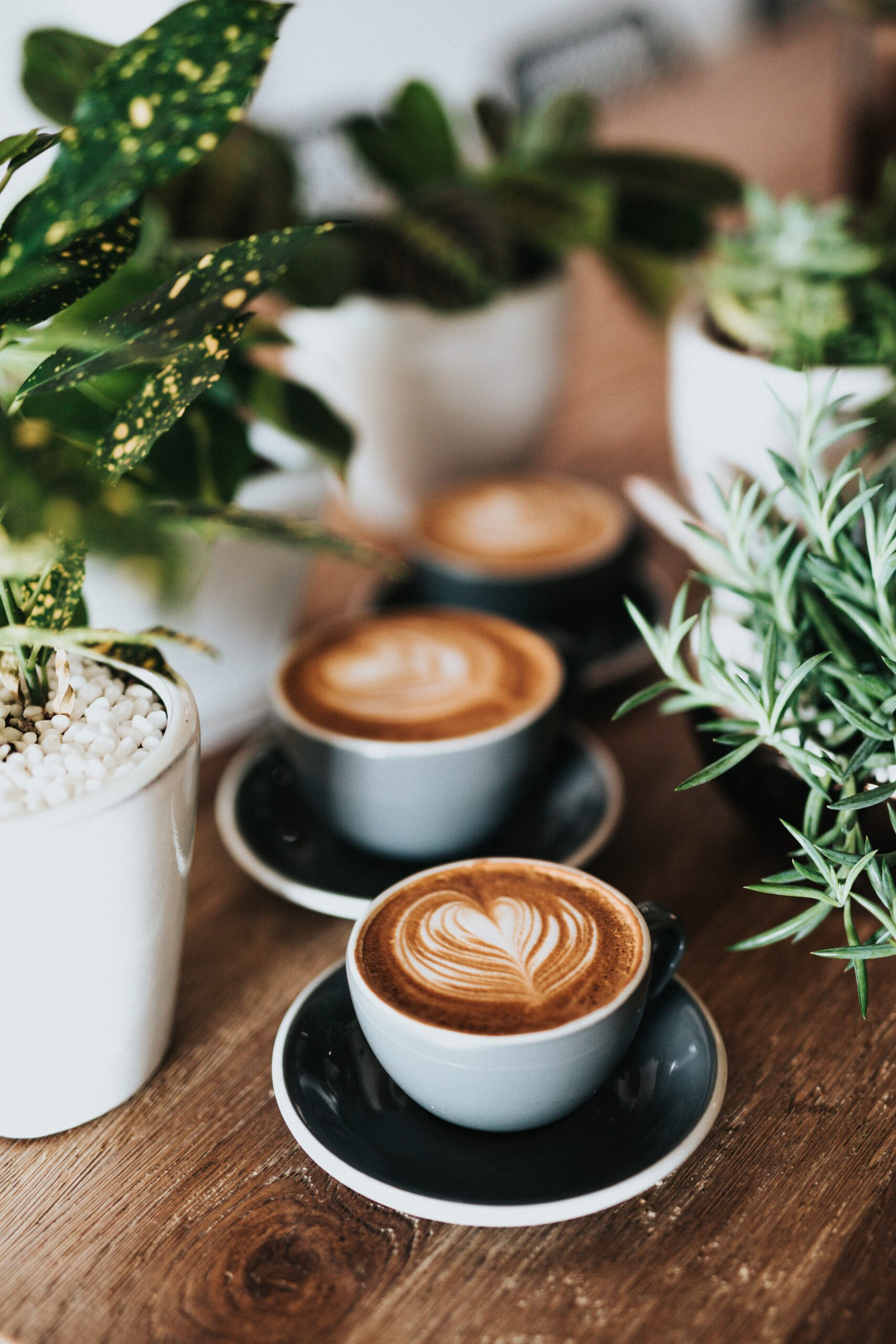 3 Heart Coffees With Plants Nathan Dumlao 426648 Unsplash